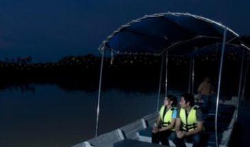 Kuala-Selangor-Country-Firefly-Tour
