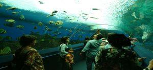 under-water-world-langkawi